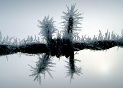 Barbed wire © NICHOLSON CREATIVE