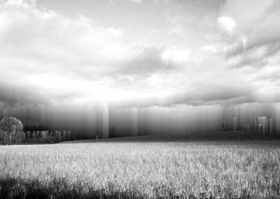 Wheat field © NICHOLSON CREATIVE